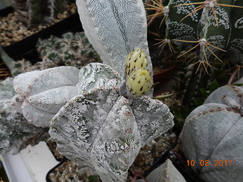 Cacti and Sukkulent in Köln, every day new flowers in the greenhouse Part 171 Bild1826