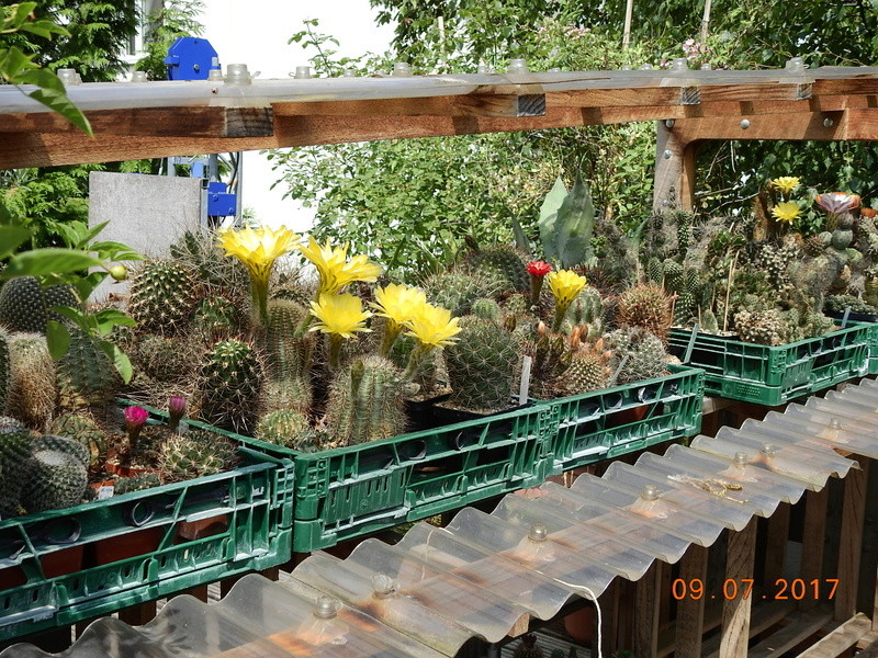 Cacti and Sukkulent in Köln, every day new flowers in the greenhouse Part 171 Bild1859
