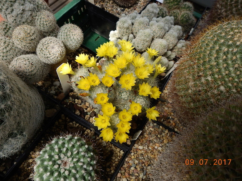 Cacti and Sukkulent in Köln, every day new flowers in the greenhouse Part 171 Bild1925