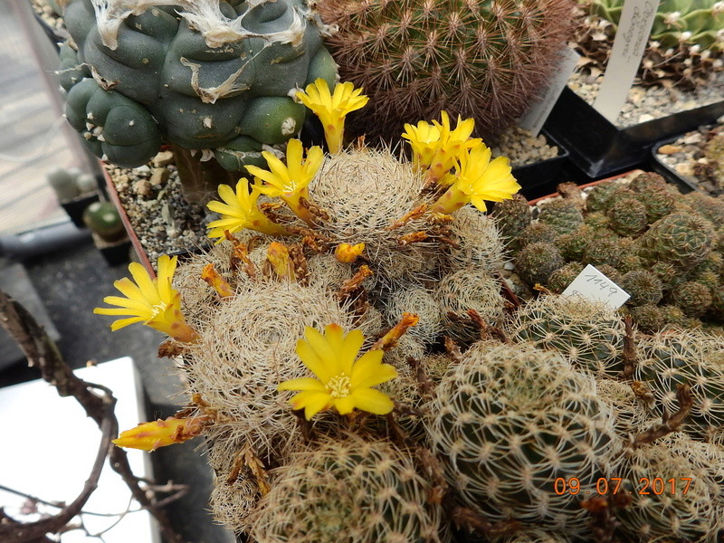 Cacti and Sukkulent in Köln, every day new flowers in the greenhouse Part 171 Bild1958