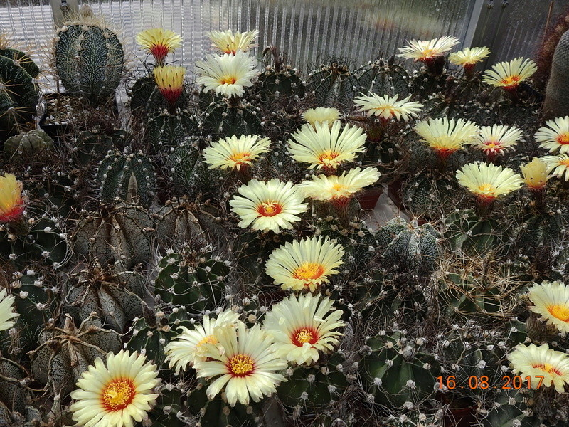 Cacti and Sukkulent in Köln, every day new flowers in the greenhouse Part 171 Bild1966