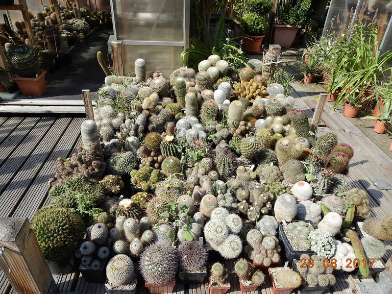 Cacti and Sukkulent in Köln, every day new flowers in the greenhouse Part 173 Bild2143