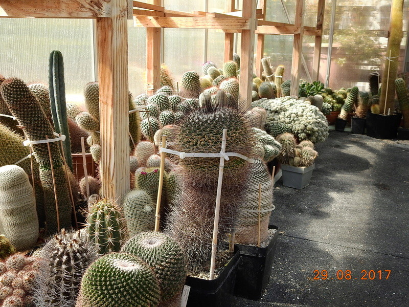 Cacti and Sukkulent in Köln, every day new flowers in the greenhouse Part 173 Bild2164