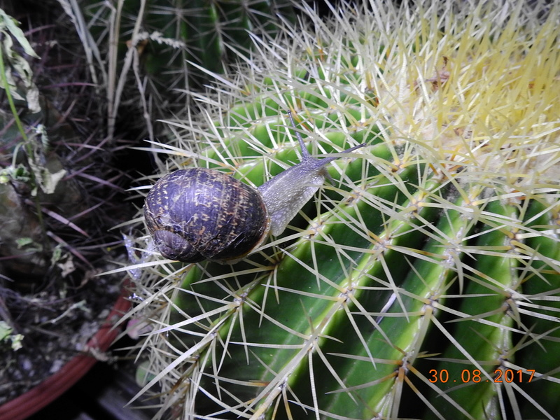 Cacti and Sukkulent in Köln, every day new flowers in the greenhouse Part 173 Bild2200