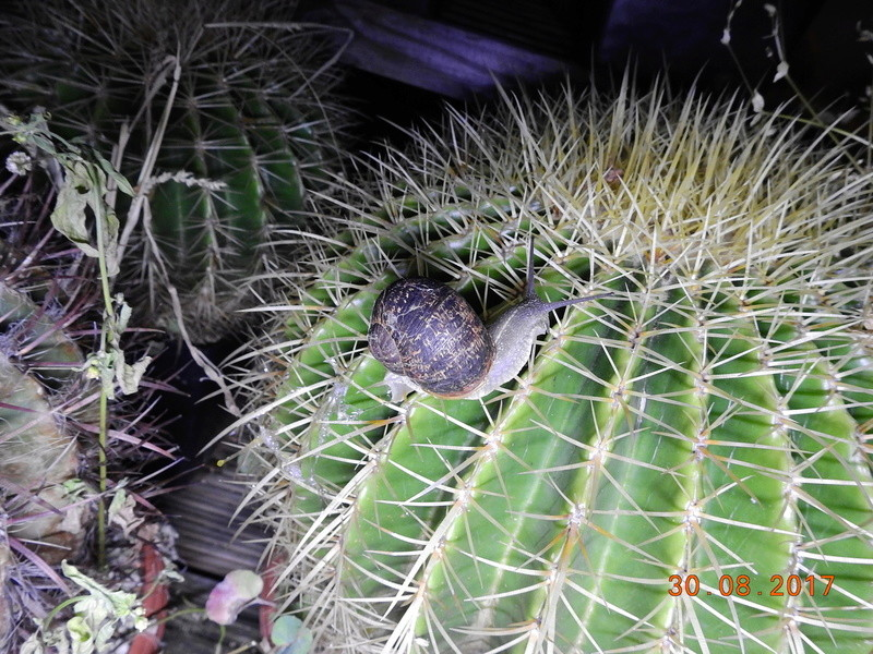 Cacti and Sukkulent in Köln, every day new flowers in the greenhouse Part 173 Bild2201