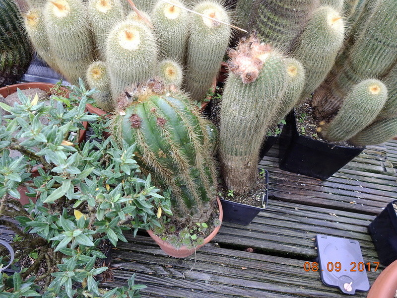 Cacti and Sukkulent in Köln, every day new flowers in the greenhouse Part 173 Bild2222