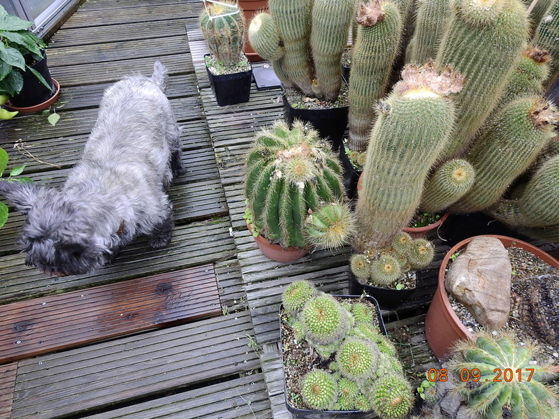 Cacti and Sukkulent in Köln, every day new flowers in the greenhouse Part 173 Bild2227