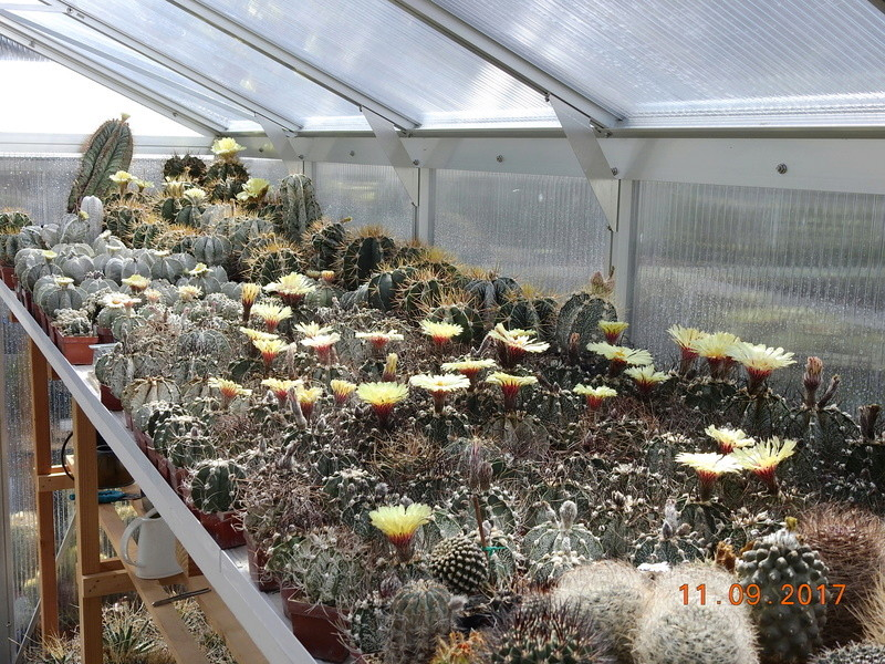 Cacti and Sukkulent in Köln, every day new flowers in the greenhouse Part 174 Bild2254