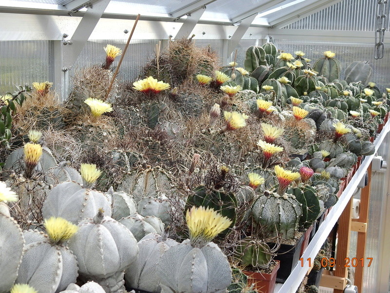 Cacti and Sukkulent in Köln, every day new flowers in the greenhouse Part 174 Bild2257