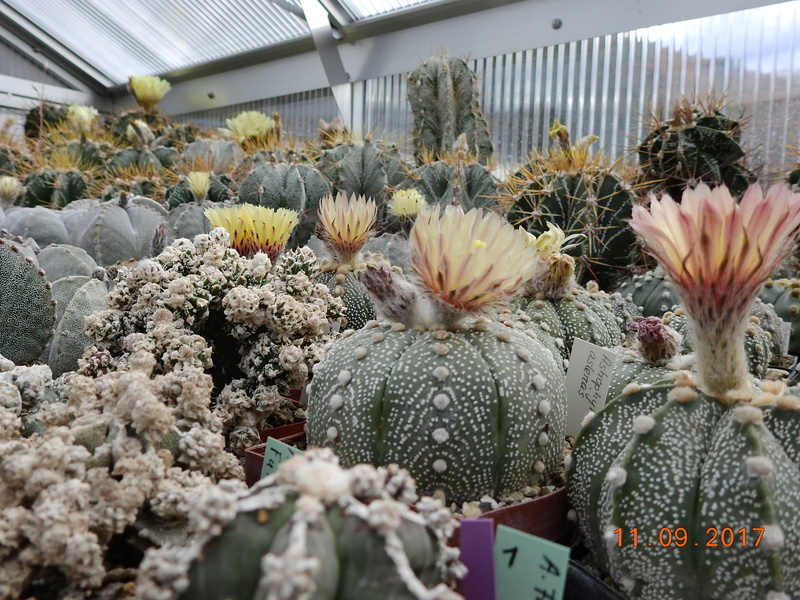 Cacti and Sukkulent in Köln, every day new flowers in the greenhouse Part 174 Bild2265