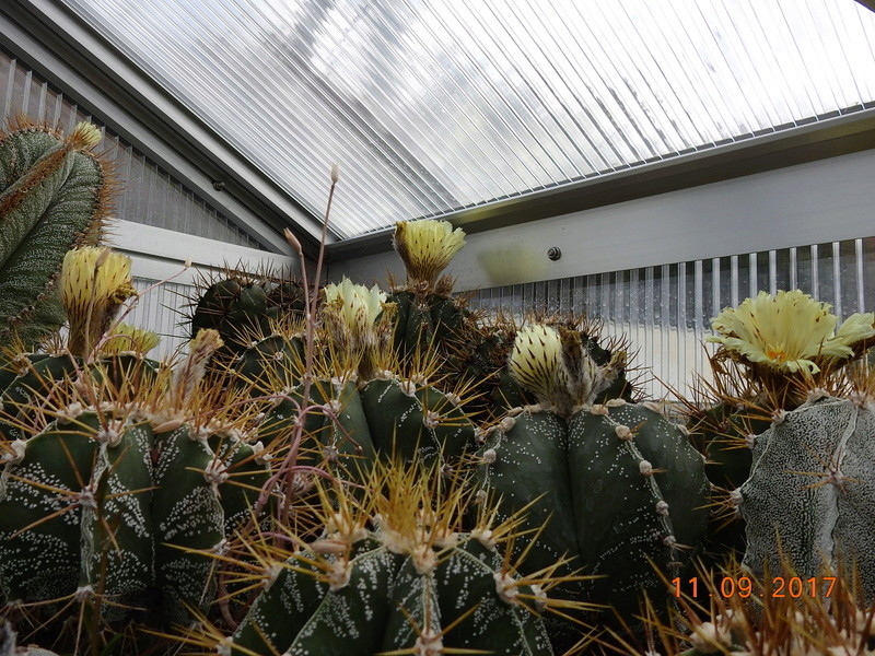 Cacti and Sukkulent in Köln, every day new flowers in the greenhouse Part 174 Bild2266