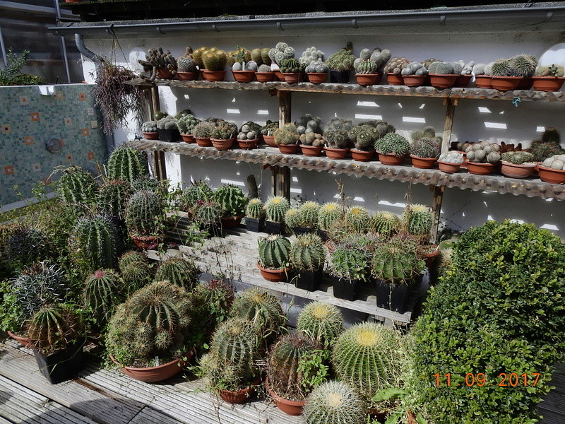 Cacti and Sukkulent in Köln, every day new flowers in the greenhouse Part 174 Bild2304