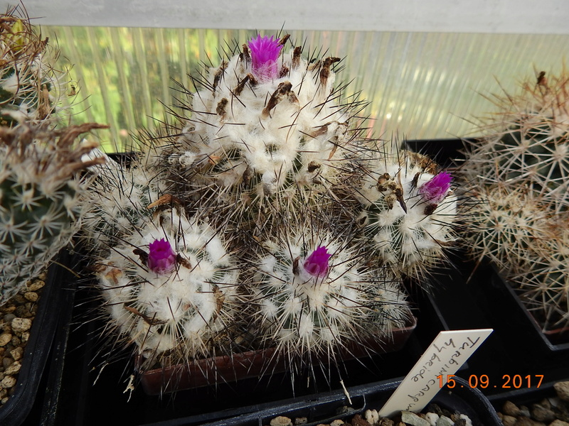 Cacti and Sukkulent in Köln, every day new flowers in the greenhouse Part 175 Bild2319