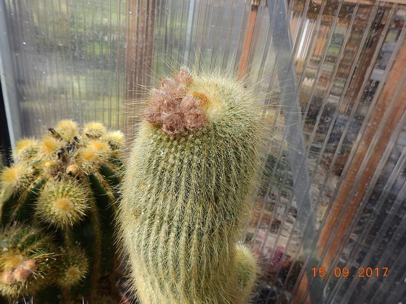 Cacti and Sukkulent in Köln, every day new flowers in the greenhouse Part 175 Bild2355