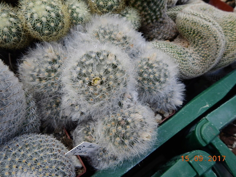 Cacti and Sukkulent in Köln, every day new flowers in the greenhouse Part 175 Bild2370