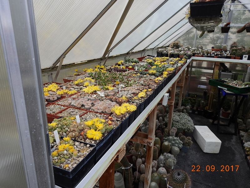 Cacti and Sukkulent in Köln, every day new flowers in the greenhouse Part 175 Bild2382