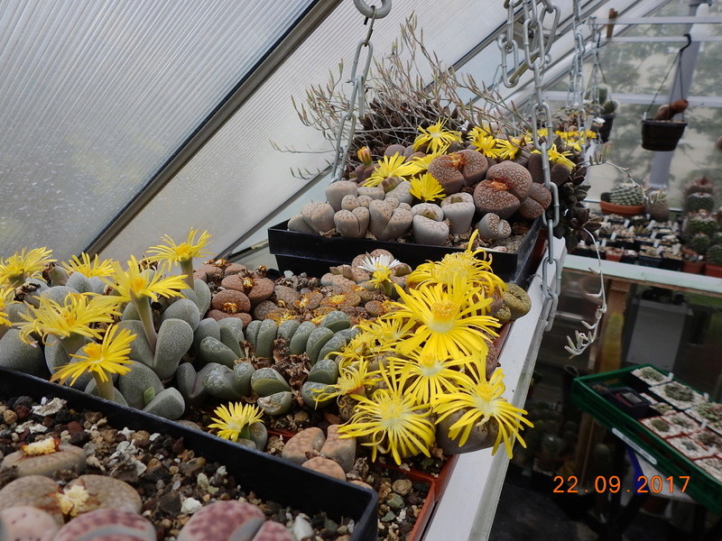 Cacti and Sukkulent in Köln, every day new flowers in the greenhouse Part 175 Bild2428