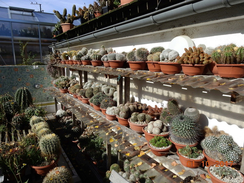 Cacti and Sukkulent in Köln, every day new flowers in the greenhouse Part 177 Bild2557