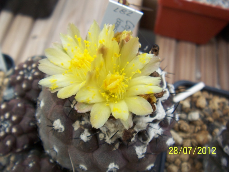 Cacti and Sukkulent in Köln, every day new flowers in the greenhouse Part 17   Bild_122