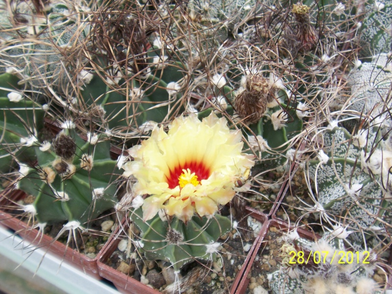 Cacti and Sukkulent in Köln, every day new flowers in the greenhouse Part 17   Bild_132