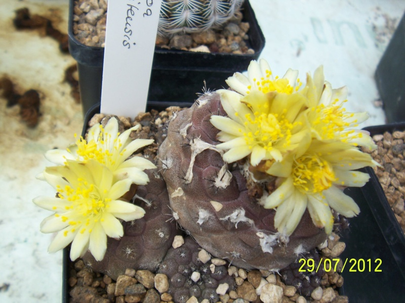 Cacti and Sukkulent in Köln, every day new flowers in the greenhouse Part 18 Bild_139