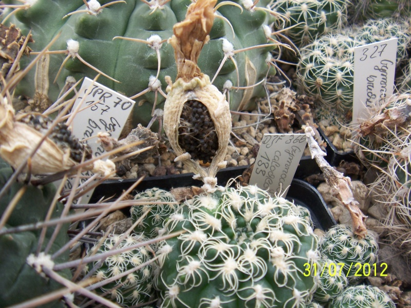 Cacti and Sukkulent in Köln, every day new flowers in the greenhouse Part 18 Bild_155