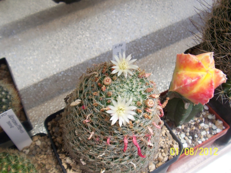 Cacti and Sukkulent in Köln, every day new flowers in the greenhouse Part 19 Bild_161