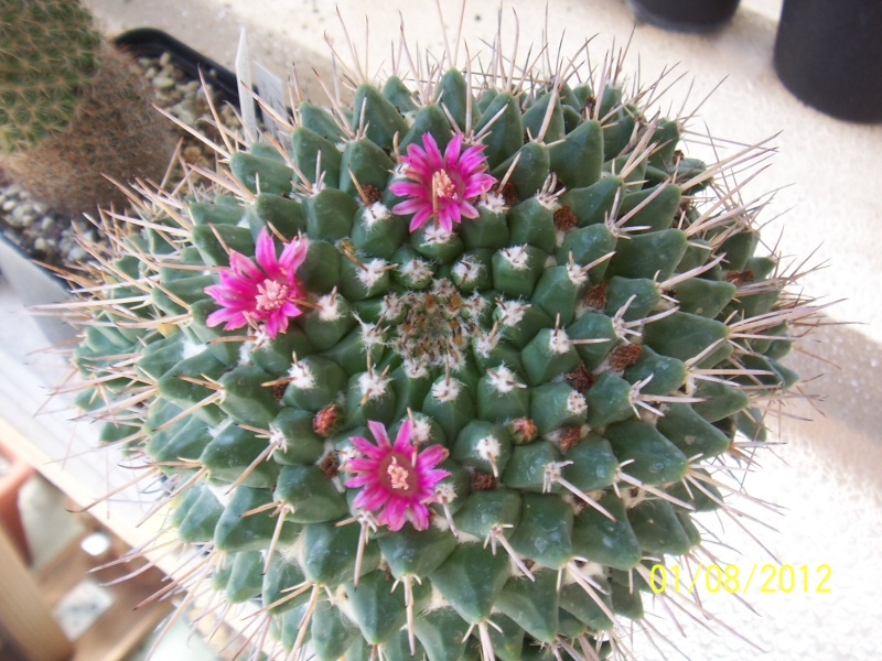Cacti and Sukkulent in Köln, every day new flowers in the greenhouse Part 19 Bild_163