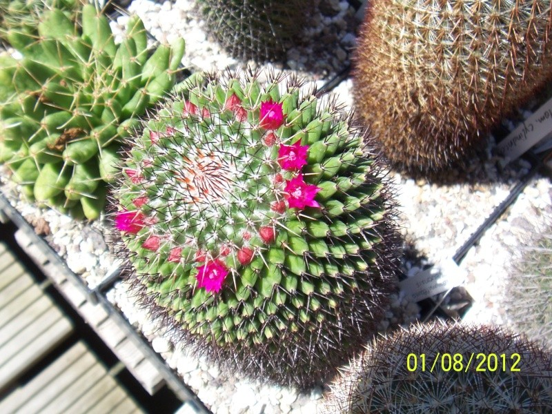 Cacti and Sukkulent in Köln, every day new flowers in the greenhouse Part 19 Bild_167