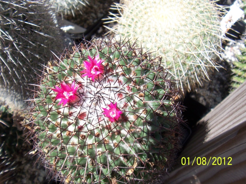 Cacti and Sukkulent in Köln, every day new flowers in the greenhouse Part 19 Bild_170