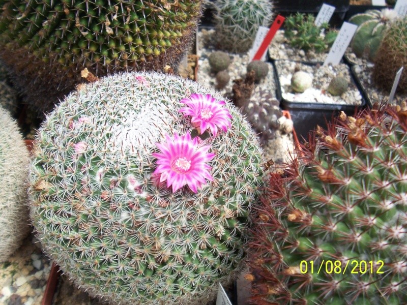 Cacti and Sukkulent in Köln, every day new flowers in the greenhouse Part 19 Bild_174