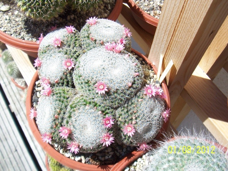 Cacti and Sukkulent in Köln, every day new flowers in the greenhouse Part 19 Bild_177
