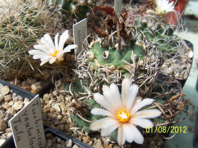 Cacti and Sukkulent in Köln, every day new flowers in the greenhouse Part 19 Bild_185
