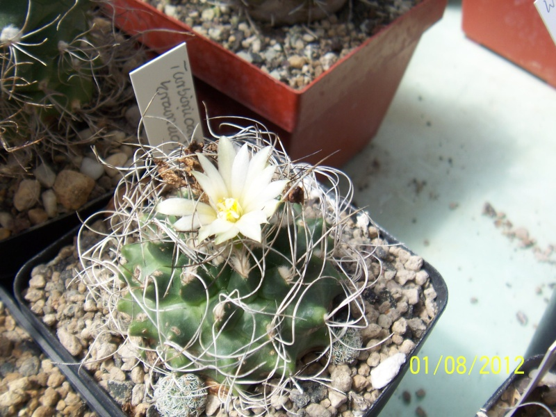 Cacti and Sukkulent in Köln, every day new flowers in the greenhouse Part 19 Bild_186