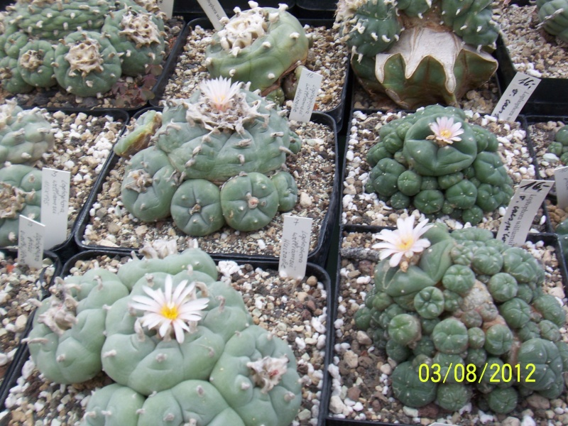 Cacti and Sukkulent in Köln, every day new flowers in the greenhouse Part 20  Bild_199