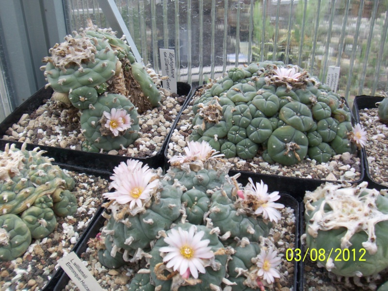 Cacti and Sukkulent in Köln, every day new flowers in the greenhouse Part 20  Bild_201