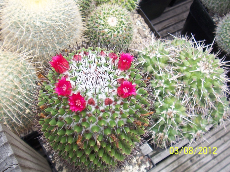 Cacti and Sukkulent in Köln, every day new flowers in the greenhouse Part 20  Bild_209