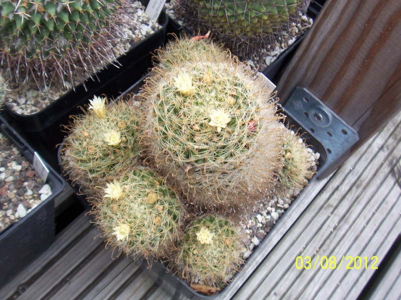 Cacti and Sukkulent in Köln, every day new flowers in the greenhouse Part 20  Bild_210