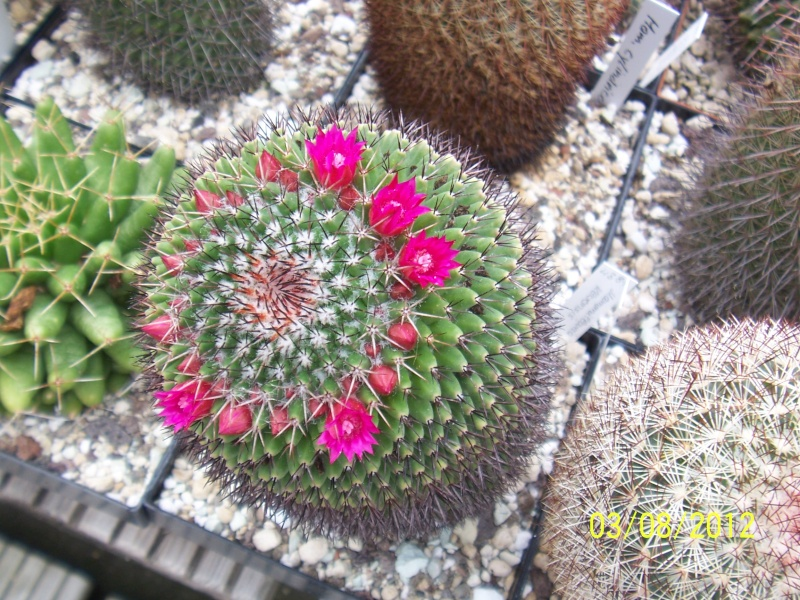Cacti and Sukkulent in Köln, every day new flowers in the greenhouse Part 20  Bild_211