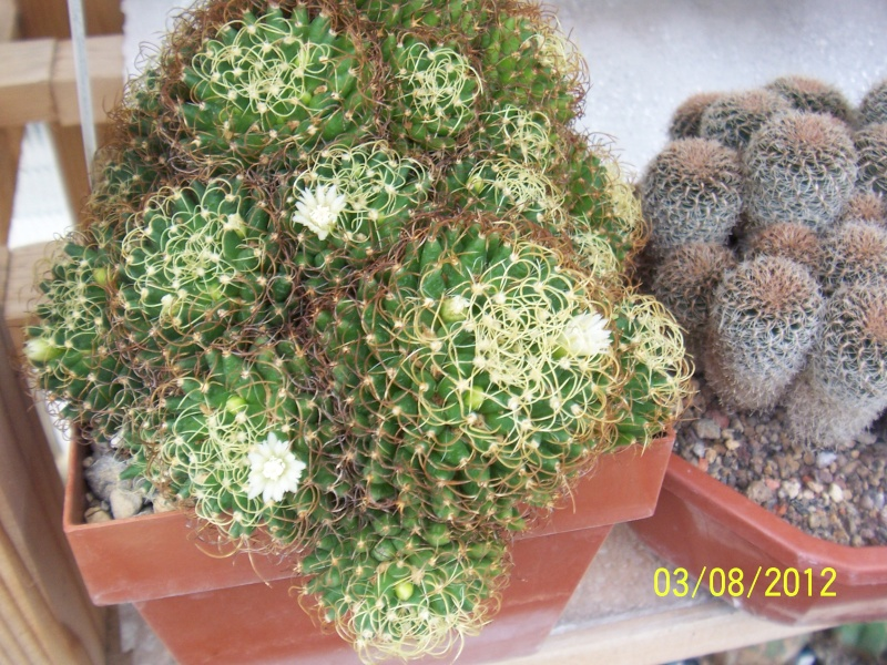 Cacti and Sukkulent in Köln, every day new flowers in the greenhouse Part 20  Bild_212