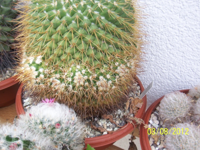 Cacti and Sukkulent in Köln, every day new flowers in the greenhouse Part 20  Bild_221