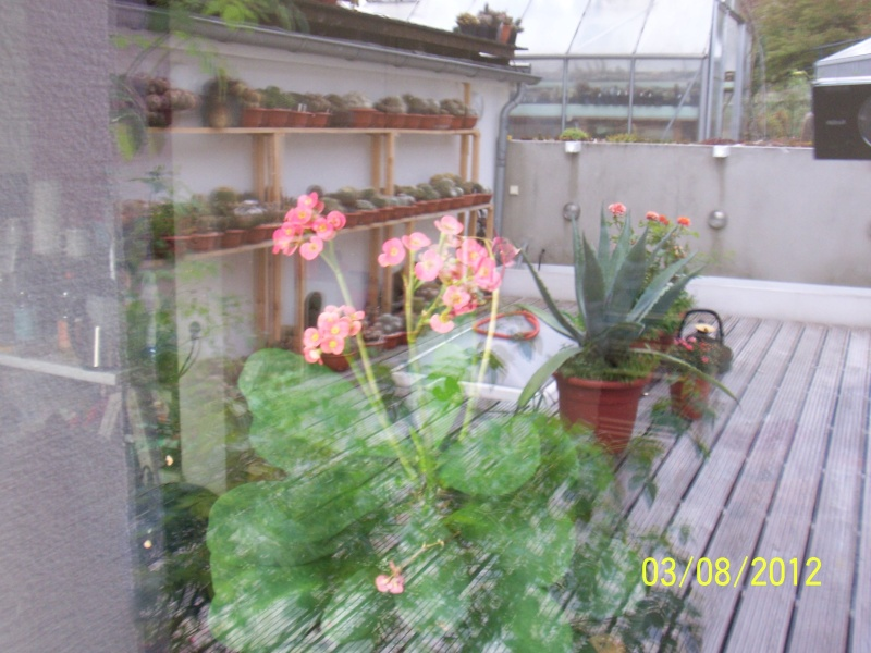 Cacti and Sukkulent in Köln, every day new flowers in the greenhouse Part 20  Bild_224