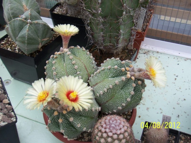 Cacti and Sukkulent in Köln, every day new flowers in the greenhouse Part 21   Bild_242
