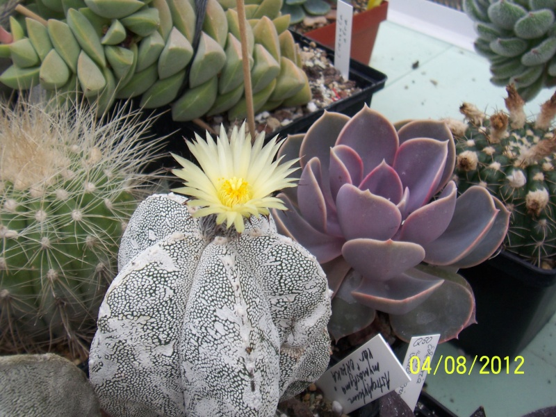Cacti and Sukkulent in Köln, every day new flowers in the greenhouse Part 21   Bild_247