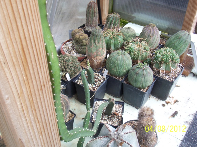 Cacti and Sukkulent in Köln, every day new flowers in the greenhouse Part 21   Bild_264