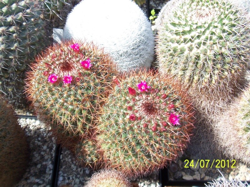 Cacti and Sukkulent in Köln, every day new flowers in the greenhouse Part 14  Bild_313