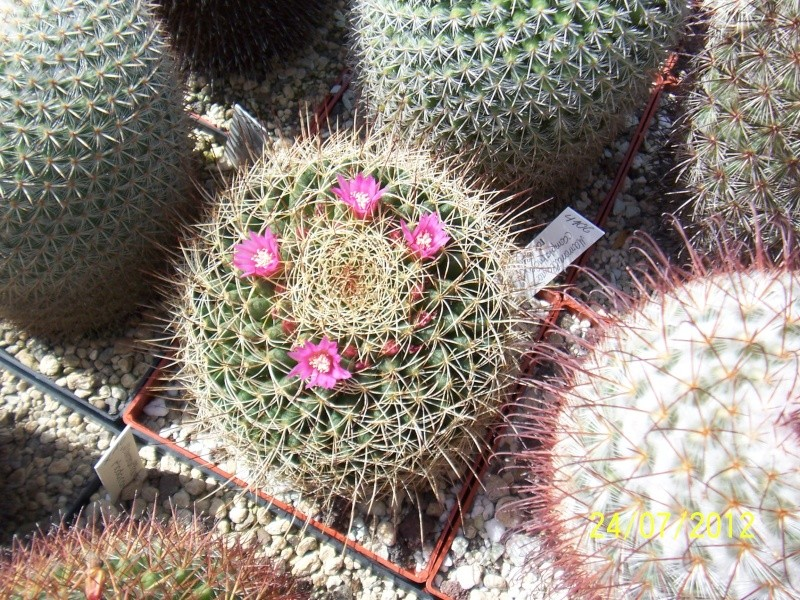 Cacti and Sukkulent in Köln, every day new flowers in the greenhouse Part 14  Bild_314
