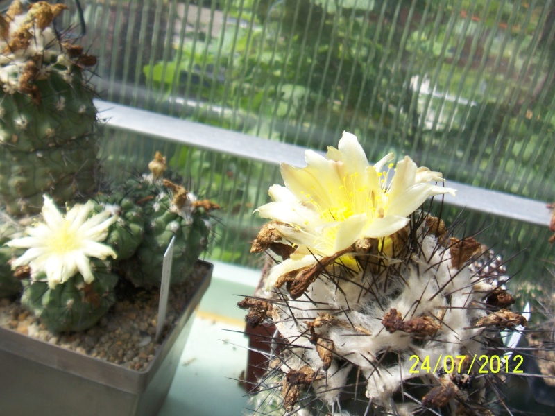 Cacti and Sukkulent in Köln, every day new flowers in the greenhouse Part 14  Bild_334