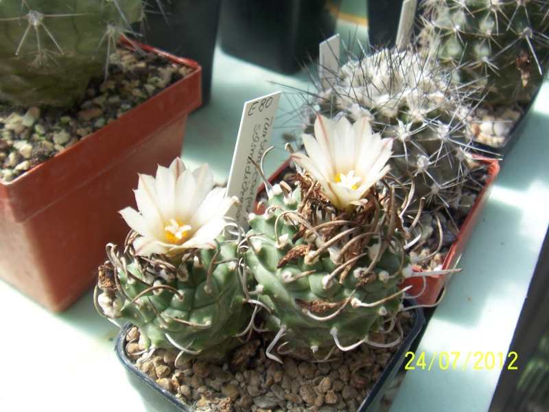 Cacti and Sukkulent in Köln, every day new flowers in the greenhouse Part 14  Bild_337
