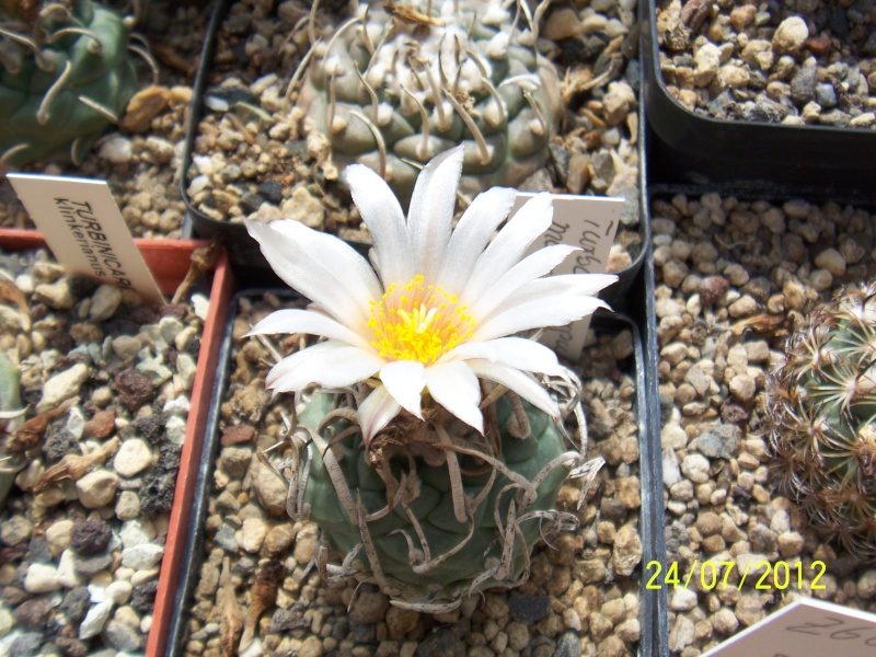 Cacti and Sukkulent in Köln, every day new flowers in the greenhouse Part 14  Bild_339